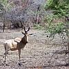 deer by CYAN5DE