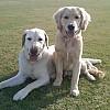 Buddy & Kaela