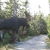 moose1 by The Man With The Plan