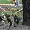 squirrels by jtw2